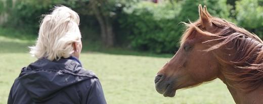Octobre 2019: Le cheval guérisseur de l'Homme ou pas?